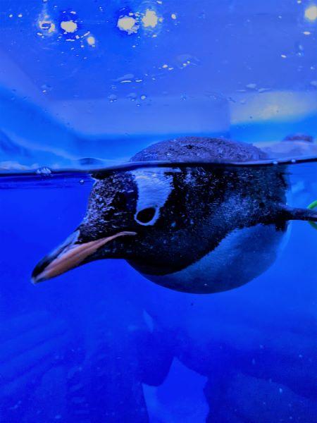 An enquisitive Penguin!